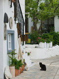 Street View with Black Cat, Manolates, Samos, Aegean Islands, Greece Fotografisk tryk af Walter Bibikow