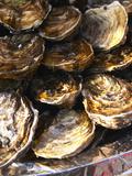 Plate of Oysters, France Fotografisk tryk af Per Karlsson