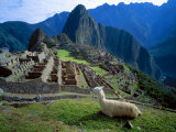 Llama Rests Overlooking Ruins of Machu Picchu in the Andes Mountains, Peru Fotografisk tryk af Jim Zuckerman