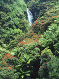 Waterfall in a Tropical Rain Forest, Hawaii, USA Photographic Print by Christopher Talbot Frank