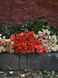 Roses for Sale on Street, San Miguel De Allende, Mexico Photographic Print by Nancy Rotenberg