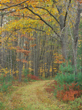 Tractor Road in the Woods on the Steele Farm, Kennebunkport, Maine, USA Photographic Print by Jerry & Marcy Monkman