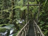 Trail in Cloud Forest, La Paz Waterfall Gardens, Central Valley, Costa Rica Photographic Print by Rolf Nussbaumer