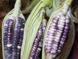 Purple Corn Displayed in Market, Cuzco, Peru Photographic Print by John &amp; Lisa Merrill