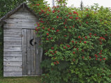 Outhouse Built in 1929 Surrounded by Blooming Elderberrys, Homer, Alaska, USA Photographic Print by Dennis Flaherty