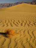 Sand Dunes in Morning Light, Mesquite Flats, Death Valley National Park, California, USA Photographic Print by Darrell Gulin