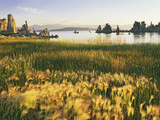 Wind Blows Squirrel-Tail Barley Next to Mono Lake with Tufas, California, USA Photographic Print by Dennis Flaherty