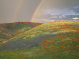 Hills with Poppies and Lupine with Double Rainbow Near Gorman, California, USA Fotografie-Druck von Jim Zuckerman