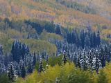 Snow on Aspen Trees in Fall, Red Mountain Pass, Ouray, Rocky Mountains, Colorado, USA Photographic Print by Rolf Nussbaumer