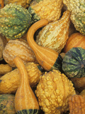 Shapes and Textures of Squash at Halloween, Acton, Massachusetts, USA Photographic Print by John & Lisa Merrill