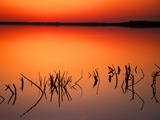 Sunset Silhouettes of Dead Tree Branches Through Water on Lake Apopka, Florida, USA Photographic Print by Arthur Morris