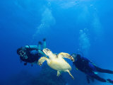 Scuba Divers with Hawksbill Turtle, Half Moon Caye, World Heritage Site, Barrier Reef, Belize Photographic Print by Stuart Westmoreland