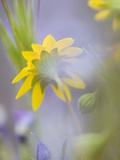 Close-up of Wildflowers Photographie par Ellen Anon