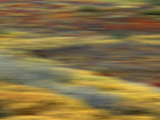 Colorful Abstract of Autumn Tundra Colors, Denali National Park, Alaska, USA Photographic Print by Arthur Morris