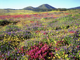 Wildflowers Near Lake Cuyamaca and Stonewall Peak, Cuyamaca Rancho State Park, California, USA Photographic Print by Christopher Talbot Frank