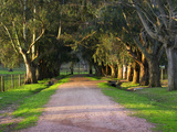Tree Lined Country Road at Sunset, Montevideo, Uruguay Photographic Print by Per Karlsson