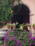 Bougainvillea and Geranium Pots on Wall in Courtyard, San Miguel De Allende, Mexico Photographic Print by Nancy Rotenberg