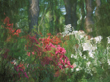 Azalea Reflection in Pond, Georgia, USA Photographic Print by Nancy Rotenberg