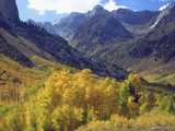 Aspen Trees in Autumn Color in the Mcgee Creek Area, Sierra Nevada Mountains, California, USA Photographic Print by Christopher Talbot Frank