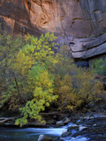 Fall Color on Virgin River, Zion National Park, Utah, USA Photographic Print by Diane Johnson