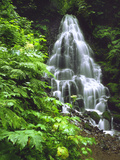 Fairy Falls Tumbling Down Basalt Rocks, Columbia River Gorge National Scenic Area, Oregon, USA Photographie par Steve Terrill
