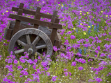 Wooden Cart in Field of Phlox, Blue Bonnets, and Oak Trees, Near Devine, Texas, USA Photographie par Darrell Gulin