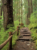 Rainforest with Trail, Sol Duc Valley, Olympic National Park, Washington, USA Photographic Print by Jamie & Judy Wild