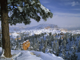 Bryce Canyon in Winter, Utah, USA Fotografie-Druck von Nancy Rotenberg