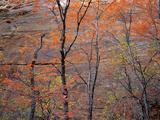 Fall Color in Zion National Park, Utah, USA Photographic Print by Diane Johnson