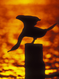 Silhouette of Double Crested Cormorant on Pile at Sunset, Jamaica Bay Wildlife Refuge, New York Photographie par Arthur Morris