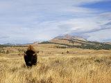 Yellowstone National Park, Wyoming, USA Reprodukcja zdjęcia autor Rolf Nussbaumer