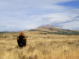 Yellowstone National Park, Wyoming, USA Photographic Print by Rolf Nussbaumer