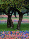 Texas Wildflowers and Dancing Trees, Hill Country, Texas, USA Fotografie-Druck von Nancy Rotenberg