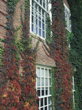 Hanover Ivy on Dartmouth College Building, New Hampshire, USA Photographic Print by John & Lisa Merrill
