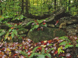 Dennis Flaherty - Autumn Colors and Boulders in the Green Mountains, Vermont, USA - Fotografik Baskı