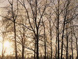 Bare Trees with Ice on Branches at Sunset, Leavenworth, Washington, USA Photographic Print by John & Lisa Merrill