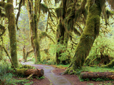 Hall of Mosses and Trail, Big Leaf Maple Trees and Oregon Selaginella Moss, Hoh Rain Forest Photographic Print by Jamie & Judy Wild