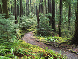Trail to Soleduc Falls, Olympic National Park, Washington, USA Photographic Print by Charles Sleicher