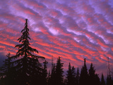 Sunset Painting Clouds Over Forest, Three Sisters Wilderness, Oregon, USA Photographic Print by Steve Terrill