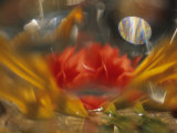 Abstract of Daylily and Begonia in Vase, Minnesota, USA Photographic Print by Richard Hamilton Smith