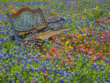 Bench in Field of Wildflowers Near Yoakum, Texas, USA Fotografie-Druck von Darrell Gulin