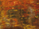 Abstract of Autumn Leaves and Reflections in Water, Lake Chippewa, Wisconsin, USA Photographic Print by Richard Hamilton Smith
