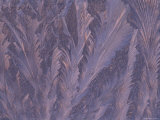 Feathery Frost Patterns on Window, Michigan, USA Photographic Print by Mark Carlson