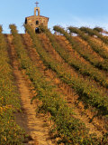 Red Willow Vineyard with Stone Chapel, Yakima County, Washington, USA Photographic Print by Jamie & Judy Wild