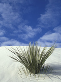 Sand Dunes at White Sands National Monument, New Mexico, USA Photographic Print by Diane Johnson