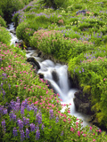 Elk Cove Creek Flowing Through Meadow of Wildflowers, Mt. Hood Wilderness, Oregon, USA Photographic Print by Steve Terrill