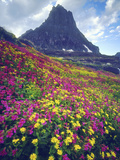 Wildflowers in Summer, Glacier National Park, Montana, USA Photographic Print by Christopher Talbot Frank