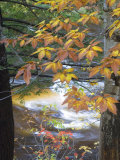 Stream and Fall Foliage, New Hampshire, USA Fotografie-Druck von Nancy Rotenberg