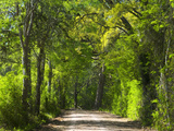 Dirt Roadway Overhanging with Greens of Oak Trees Near Independence, Texas, USA Photographic Print by Darrell Gulin