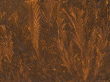 Golden Frost Patterns on Window at Sunrise, Michigan, USA Photographic Print by Mark Carlson